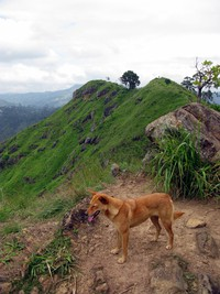 dog on little Adam's Peak